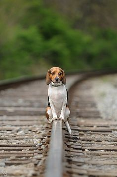 """Even if you're on the right track, you won't get anywhere if you just sit there.""  -Will Rogers"