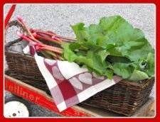 Rhubarb Harvesting, Maintenance, Transplanting and Dividing