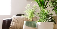 Essentials For Your Living Room | When returning to the apartment after work, why not be greeted by plant friends? https://www.mindbodygreen.com/articles/living-room-feng-shui?utm_campaign=crowdfire&utm_content=crowdfire&utm_medium=social&utm_source=pinterest