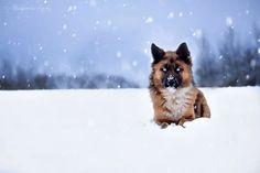 Tiko - pies o magicznym spojrzeniu szuka domku!