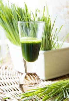 The health benefits of wheatgrass surpass most other super-foods. Wheatgrass is not the most-loved super-food on the planet, mainly because not a lot of people like how it tastes, Edible Grass, Edible Plants, Whole Food Diet, Whole Food Recipes, Benefits Of Wheatgrass Shots, Wheat Grass Shots, Make Hair Thicker, Reverse Hair Loss, Barley Grass