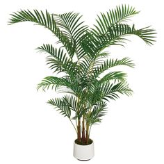 Looking for indoor palm trees ? Here you can find the latest products in different kinds of indoor palm trees. We Provide 5 for you about indoor palm trees- page 1 Indoor Palm Trees, Small Palm Trees, Indoor Palms, Palm Tree Plant, Artificial Plants And Trees, Plants Indoor, Potted Plants, Hemnes, Kentia Palm