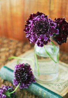 Scabiosa #deep #purple #flowersN ❉ღϠ₡ღ✻↞❁✦彡●⊱❊⊰✦❁ ڿڰۣ❁ ℓα-ℓα-ℓα вσηηє νιє ♡༺✿༻♡·✳︎· ❀‿ ❀ ·✳︎· SAT Sep 10, 2016 ✨ gυяυ ✤ॐ ✧⚜✧ ❦♥⭐♢∘❃♦♡❊ нανє α ηι¢є ∂αу ❊ღ༺✿༻♡♥♫ ~*~ ♪ ♥✫❁✦⊱❊⊰●彡✦❁↠ ஜℓvஜ