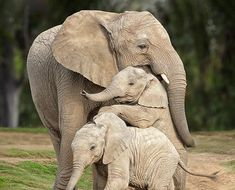 Zoo Animals, Cute Baby Animals, Animals And Pets, Animals Planet, Wild Animals, Wild Animal Wallpaper, Elephant Photography, Elephant Pictures, Elephant Love