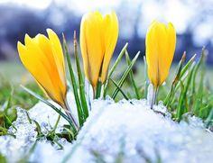 Milloin kevät alkaa? | Me Naiset