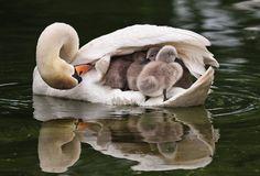 parents of animals