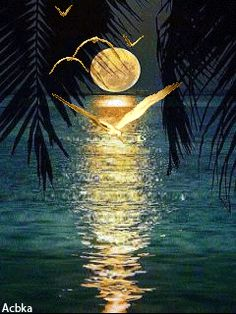 The Beauty and Reflection of the Moon./ss
