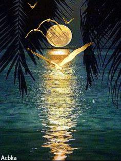 Лунная ночь - анимация на телефон №1342895