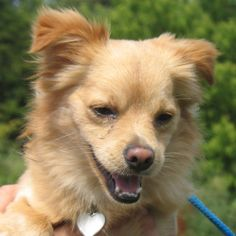 8/23/12 - Palucha was adopted!