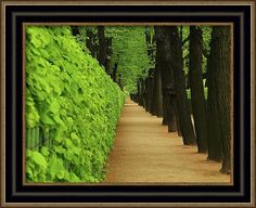 Mary Raven Framed Print featuring the photograph Shady Path_1 by Mary Raven