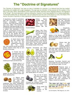 Relationship of fruits and veg and how their shapes relate to the parts of our body they are good for.