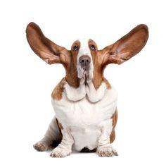 Big Ears, Big Heart.
