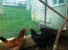 4 birds fly off to their new home from the GSPCA Animal Shelter | #GSPCA #Guernsey  http://www.gspca.org.gg/blog/4-birds-fly-their-new-home-gspca-animal-shelter