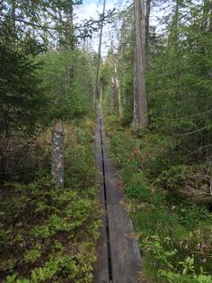 Campground Trail to Burntbridge Pond Trail, Cranberry Lake, NY