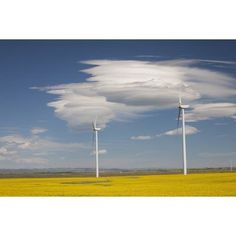 Dramatic Clouds With Blue Sky And Windmills In A Flowering Canola Field Alberta Canada Canvas Art - Michael Interisano Design Pics (19 x 12)