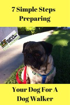 If you are considering hiring a dog walker or if you are in the process of hiring one, did know there are simple steps you can take before the walks start to prepare your dog to help the visits go smoothly? Check out our article to learn more.