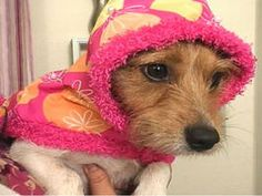 Sew a Dog Raincoat and Collar : Decorating : Home & Garden Television