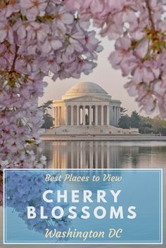 Explore the best places to see the Blossoms during the most beautiful time in Washington DC
