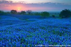 Texas in all Her Glory!  Photo by Laura Vu.  Layers, Farris County Texas.