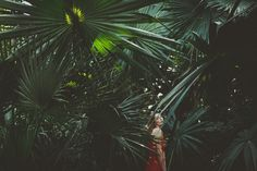 Hidden Beauty. by Patricia Haas