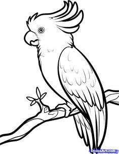 Как нарисовать какаду поэтапно
