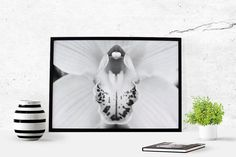 Orchid photography Orchid art Flower by LydiaVideiraLight on Etsy