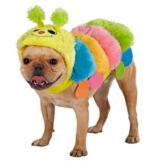 That's one cute caterpillar from Top Paw® - PetSmart $13.59
