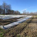 Sweet Pea Farm.