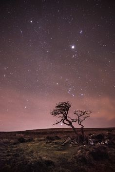 Familiar stars and constellations form a line rising up behind this windswept tree in Dartmoor National Park in the southwest of England. Just above the horizon is Sirius, the brightest star in the sky, photographed by Anna Walls Night Sky Stars, Sky Full Of Stars, Star Sky, Night Skies, All Nature, Science And Nature, Ciel Nocturne, Dartmoor National Park, Milky Way