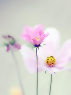 Soft flower paintings