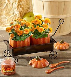 Celebrate Thanksgiving with this playful Fall Pumpkin Hayride arrangement in an adorable pair of ceramic sugar and creamer pumpkins! Each ceramic pumpkin is filled with mini orange mum plants and two serving spoons tucked inside a metal wagon so you can use the pumpkin cream and sugar containers for years to come!