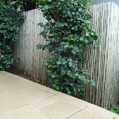 Chippy's Outdoor - Touchwood Latte Poles, Decorative Hardwood Screening and Cladding, Sustainable Eucalyptus