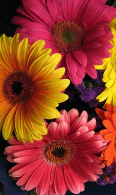 Sunflowers And Daisies, All Flowers, Vintage Flowers, Pretty Flowers, Spring Flowers, Gerbera Daisies, Vintage Flower Backgrounds, Daisy Wallpaper, Flower Phone Wallpaper
