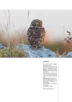 La civetta (pubblicata sulla rivista Le Fate - 2012)