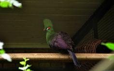 Top 10 Most Rare Birds