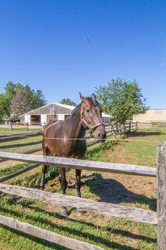 Horse at Caumsett State Park, Huntington, NY (08/23/2016)
