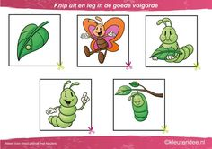 Knip uit en leg de plaatjes in logische volgorde van ei tot vlinder, kleuteridee.nl, cut out and sequece butterfly life cycle free printable.