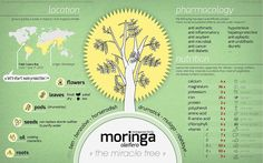 Moringa powder nutritional value. Benefits of moringa powder. Miracle health benefits of moringa olifeira. Moringa full of iron, calcium, vitamin A. Tea Benefits, Health Benefits, Diabetes, Miracle Tree, Moringa Powder, Acide Aminé, Nutritional Value, Moringa Oleifera, Tree Of Life
