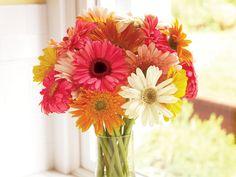 Gerbera daisies, one of my favorite flowers.