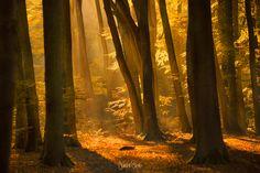 Modern light - Light beams in a typical Dutch forest. Photography by Jurgen Siero