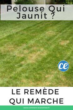 Le remède naturel qui marche contre la pelouse et le gazon qui jaunit.