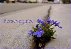 PERSEVERANCE!  :)