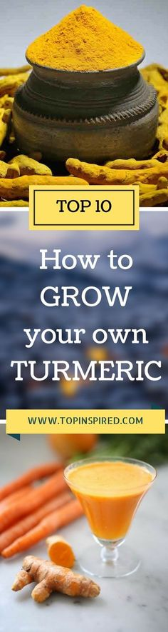 The whole plant is edible; the roots ground up to produce turmeric powder, the leaves can be used as a wrap for steamed fish, and even the flowers can be eaten. Let's see ten tips on how to grow your own turmeric! - #Turmeric