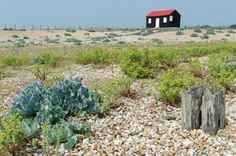 Rye Sussex - large coastal nature reserve with a vast array of wildlife Rye Sussex, East Sussex, Rye Harbour, Romney Marsh, England Uk, Nature Reserve, Cool Photos, Amazing Photos, Bird Watching
