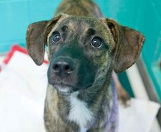 Pattie was adopted!