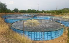 Proyecto desarrollado en el año 2014 para piscicultores de Asosierra en este municipio tolimense. Koi Fish Care, Aquaponics, Outdoor Decor, Tilapia, Culture, Fish Farming, Crafts To Make, Houses, Blue Prints
