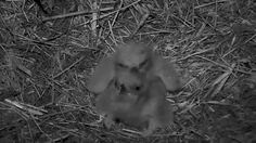 AEF DC - EAGLE CAM 🐣🐣 TWO ADORABLE'S MELT YOUR HEART MOMENT! We have an Awesome God! He designed male and female....
