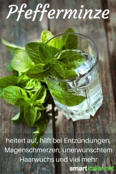 Peppermint is boring?- Peppermint not only tastes good in chewing gum and candy. This herb is incredibly healthy and versatile. The best applications for your health here Source by birgitkohlrausc - Kitchen Herbs, Healthy Beauty, Superfood, Peppermint, Natural Remedies, Herbalism, Smoothie, Health Fitness, Nutrition