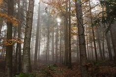Осенью, Туман, Красочные Листья, Природы