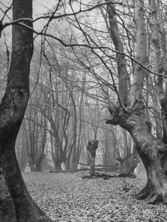 The Epping Forest Is Where King Henry VIII Was Waiting for Word of Anne Boelyn's Execution